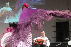 flamenco (5)